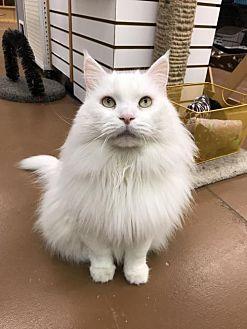 Adopt A Pet :: Frosty  - Blasdell, NY