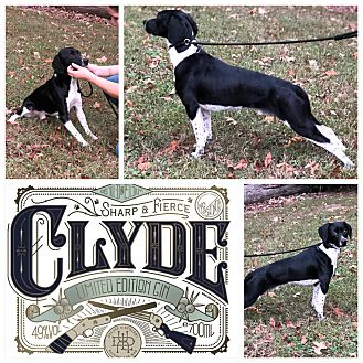 Adopt A Pet :: Clyde  - Clarksville, TN