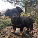 Adopt A Pet :: Toby Triscuit
