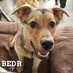 Bright Eyes Dog Rescue in Regina, Saskatchewan