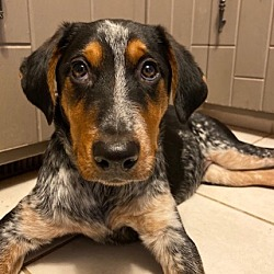 Midwest Dog Rescue Network in Omaha, Nebraska
