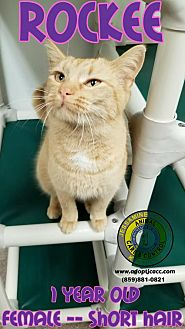 Adopt A Pet :: Rockee  - Nicholasville, KY