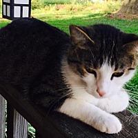 Adopt A Pet :: Elsa C1883 - Shakopee, MN