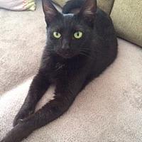 Adopt A Pet :: Trixie - Long Beach, NY