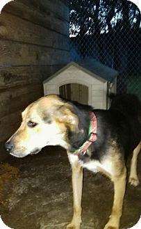 Shepherd (Unknown Type) Mix Dog for adoption in springtown, Texas - Roxie aka Daisy