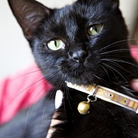Adopt A Pet :: Binx - Princeton, MN