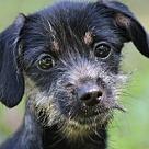 Adopt A Pet :: Marilyn B