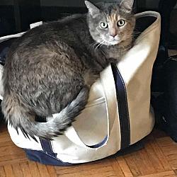 Kittens for Sale in Boston Massachusetts - Adoptapet com