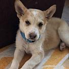 Adopt A Pet :: Faceoff