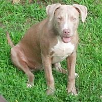 Adopt A Pet :: Aliyah