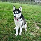 Adopt A Pet :: ASPEN