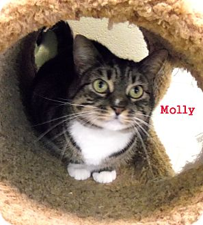 Domestic Shorthair Cat for adoption in Slidell, Louisiana - Molly
