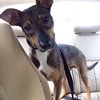 Adopt A Pet :: Trevor (COURTESY POST) - Baltimore, MD