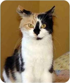Domestic Longhair Cat for adoption in Toronto, Ontario - Samantha