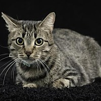 Adopt A Pet :: Baby - Gainesville, FL