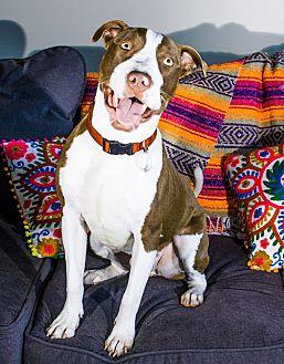 Adopt A Pet :: Marco  - Troy, MI