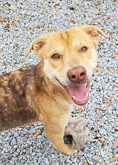 Adopt A Pet :: Clara  - Snow Hill, NC