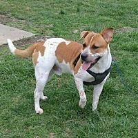 Adopt A Pet :: RASCAL - Allentown, PA