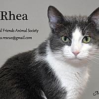 Adopt A Pet :: Rhea - Ortonville, MI