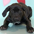 Adopt A Pet :: Hess