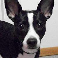 Adopt A Pet :: Tank - Mtn Grove, MO