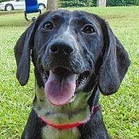 Adopt A Pet :: Marlow - CUMMING, GA