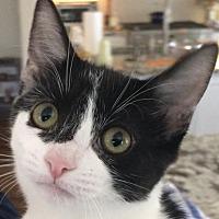 Adopt A Pet :: Annie - Auburn, CA