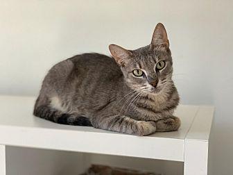 Adopt A Pet :: Ivy  - BROOKLYN, NY