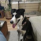 Adopt A Pet :: Zuni