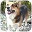 Photo 1 - Corgi Dog for adoption in Provo, Utah - JAMIE