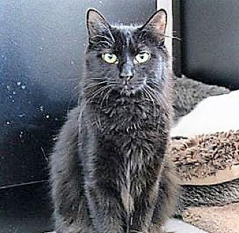 Cat Adoption Richmond Hill