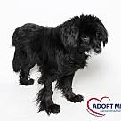 Adopt A Pet :: Skywalker