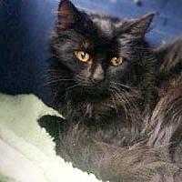 Adopt A Pet :: Jamine - Cranford, NJ