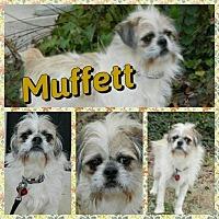 Adopt A Pet :: Muffet - Newnan, GA