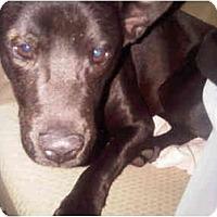 Adopt A Pet :: Lucky - miami beach, FL