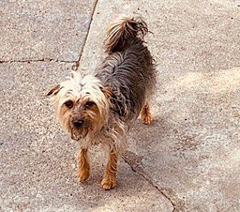 Adopt A Pet :: MOCHI GIRL  - Oakland, CA