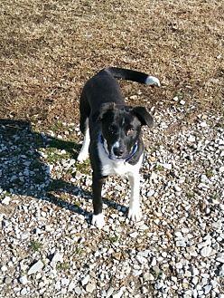 Adopt A Pet :: Bandit  - Mt Vernon, IN