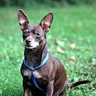 Adopt A Pet :: CHOCOLATE PRINCESS