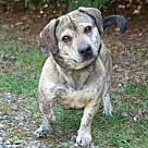 Adopt A Pet :: Potato FKA Heinz