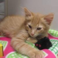 Geauga Humane Society Rescue Village In Novelty Ohio