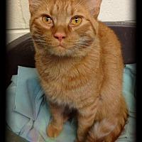 Adopt A Pet :: Jericho - Hartford City, IN