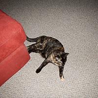 Adopt A Pet :: Cutie - Claremont, CA