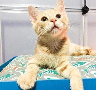 Adopt A Pet :: MM-Alan  - Devon, PA