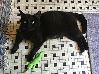 Adopt A Pet :: Hazel  - BROOKLYN, NY