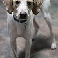 Adopt A Pet :: Trucker - Stafford, VA