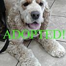 Adopt A Pet :: Marlee