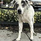 Adopt A Pet :: Highway