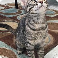 Adopt A Pet :: Lucky - Saint Robert, MO