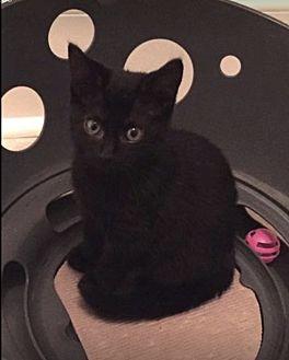Adopt A Pet :: Anna  - Northwood, NH