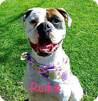 Boxer Dog for adoption in El Cajon, California - Ruthie